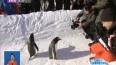 """极地动物""""零距离""""    """"网红企鹅""""带游客玩转冰雪季"""