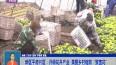 """新区平房片区:升级花卉产业  美丽乡村绽放""""致富花"""""""