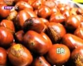 消费实验室:板栗挑选小妙招