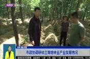 市政协调研依兰等地林业产业发展情况