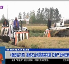 《奋进哈尔滨》推动农业优质高效发展 打造产业兴旺新乡村