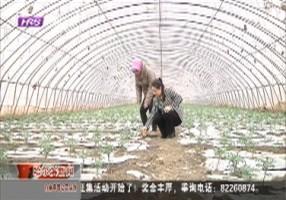 唐艳丽:在希望的田野里播种梦想