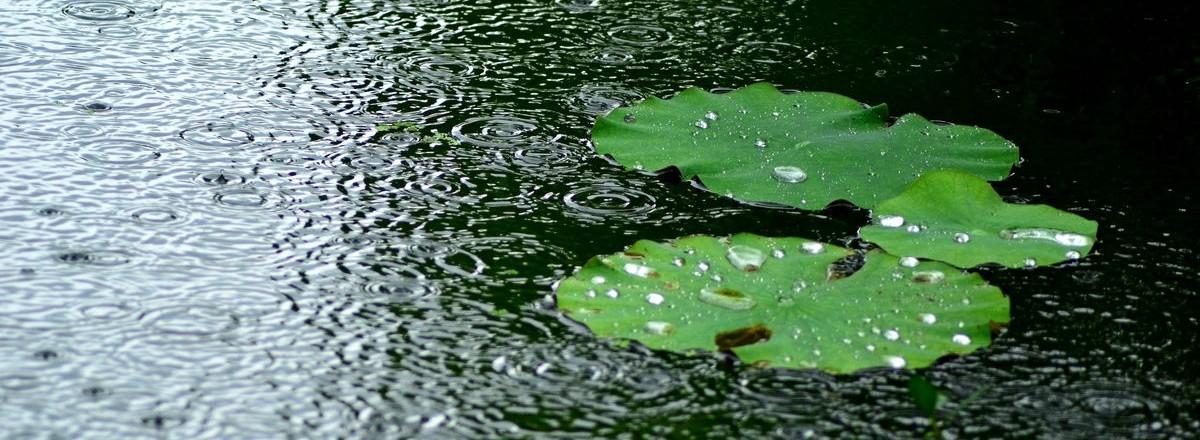 《听雨》作者:阿紫