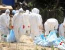韩国一农场发现禽流感疑似病例 大量鸡鸭遭宰杀