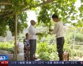开展庭院改造 新疆叶城村民持续稳定增收