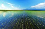 20余万亩黑土地实施国家级保护 呼兰双城两试点率先推行系列保护措施