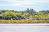 加强重点区域重点领域监管保护力度 积极推进生态环境保护污染防治绿色发展