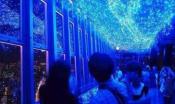 日本东京塔水族馆因拖欠租金被起讼 9月底将停业