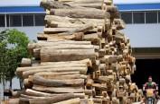 俄罗斯对华原木出口增长20%