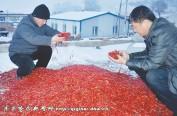 """龙江辣椒成""""香饽饽""""一年外销10亿元"""
