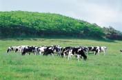 韩国确认一乳牛场出现口蹄疫 称疫情不大可能扩散