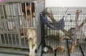亚洲首例! 台湾立法禁吃狗肉 骑电单车遛狗将受罚