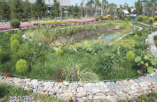 """哈尔滨建设七个""""海绵城市""""试点项目 群力健康生态园花园藏个吃水""""大胃王"""""""