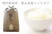 日本富山开始向味千拉面供应富山大米