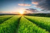 日本设立一站式咨询中心 派遣专家队伍精准扶持农户公司化经营