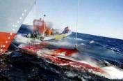 日本拟花费1亿日元升级捕鲸船 南极捕鲸仍将持续
