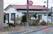 福岛核事故后日本学生远离核能业 致行业形势严峻