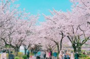 樱花何时开? 2018年韩国各地樱花开放日期预测