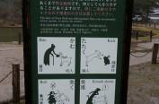 日本奈良鹿咬人情况不断增加 受害者八成为外国人