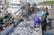 日本水产厅连续4年维持秋刀鱼渔获量范围