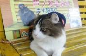 """日本猫咪站长RABU""""兼职""""福岛芦之牧温泉的旅游大使"""