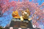 """日本两只猫咪成""""旅行达人"""" 跟主人走遍全国"""
