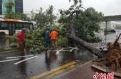 """""""山竹""""致华南多地狂风暴雨 停运高铁今起逐步恢复"""