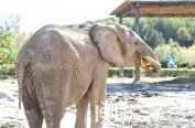 """中秋节动物们吃""""私人订制""""月饼 非洲大象的月饼脸盆大"""