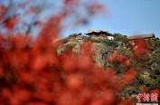"""今日霜降:吃柿子赏红叶 人们开始""""备冬"""""""