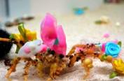 日本一水族馆推出万圣节特别活动 为螃蟹戴上蝴蝶结