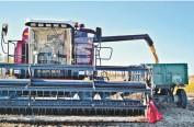 冰城企业在俄远东45万亩大豆熟了