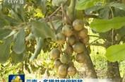 云南:多措并举促脱贫