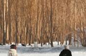 """来哈""""玩寒冷""""的外地人最爱这么玩 大数据说话:冰城三条冰雪线路全国最热"""
