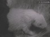 日本东京上野动物园降生熊猫宝宝已被确认为雌性