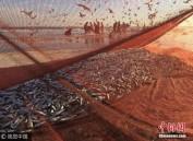 北海道大量沙丁鱼随流冰?#20064;?引来大批民众捡拾