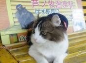 """日本猫咪?#22659;ABU""""兼职""""福岛芦之牧温泉的旅游大使"""