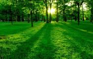 奋斗林场 科学规划助力蜂产业远航