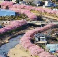 日本多地迎来赏樱时节 春色撩人浪漫唯美