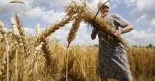 Поставки зерна из России в Китай стремительно выросли в 2016 году