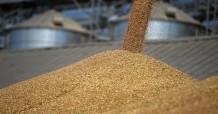 СМИ:первая партия российской пшеницы пересекла границу Китая