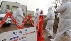 韩京畿道和忠南3处养鸡场检测出高致病性禽流感