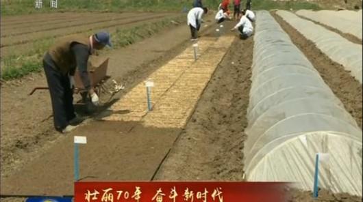 【壮丽70年 奋斗新时代】科技助力 海水稻测试面积近两万亩