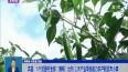 """宾县:5个贫困村全部""""摘帽""""出列 三大产业项目助力农户脱贫奔小康"""