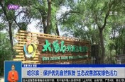 哈尔滨:保护优先自然恢复 生态改善激发绿色活力