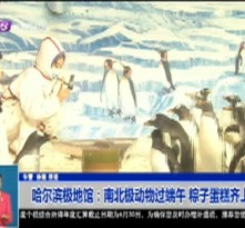 哈尔滨极地馆:南北极动物过端午 粽子蛋糕齐上阵