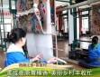 【走进乡村看小康】西藏江孜·紫夏村:雪域高原青稞香 美丽乡村丰收忙
