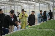 """原州区彭堡镇冷凉蔬菜产业:""""菜篮子""""鼓起农民的""""钱袋子"""""""